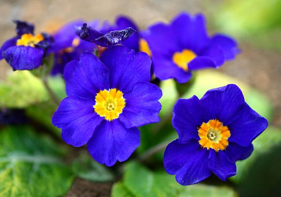 A színpompás tavaszi virágok mellett az üvegház egzotikus különlegességeiben is gyönyörködhetsz, de a természetvédelmi kiállítást se hagyd ki.