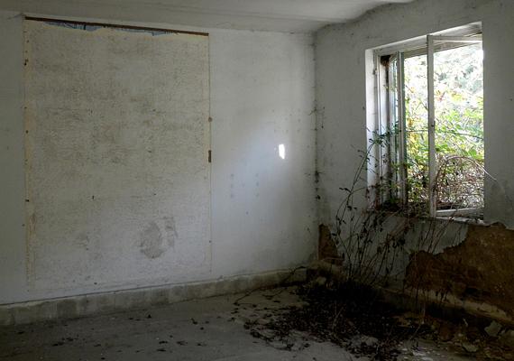 A növények nemcsak odakint burjánzanak, az épületekbe is betörtek.