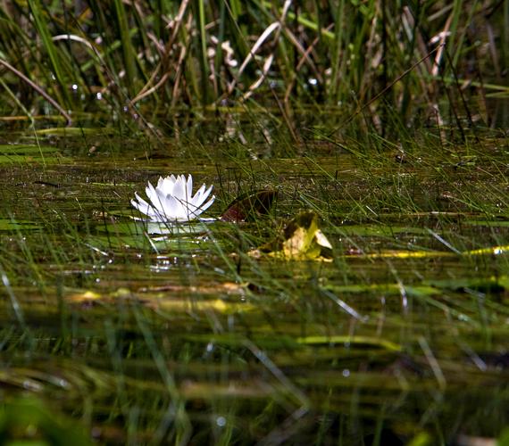 A sekély, 1770 négyzetkilométeres vízivilág Georgia, illetve a határos Florida állam egyik legérdekesebb természeti csodája.