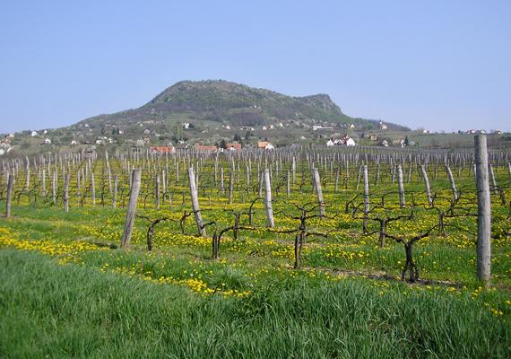 Ha hiányzik a Balaton, vedd célba a Szent György-hegyet! Alaposan átmozgathatod minden porcikádat, a hegytetőről pedig gyönyörködhetsz a magyar tenger tavaszi nyugalmában.