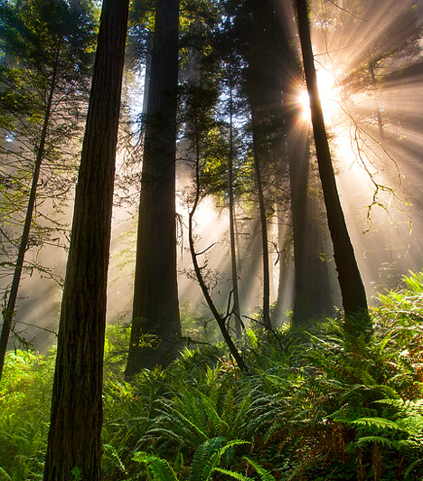 Redwood Nemzeti Park, USAAz ősi mamutfenyők által uralt vidéken forgatták le az eredeti Csillagok háborúja-trilógia legemlékezetesebb jeleneteit, ez adott ugyanis otthont az ewokok hazájának, az Endor nevű bolygónak, így a híres endori csatának is, mely után Palpatine-t és Darth Vadert is itt temették el.