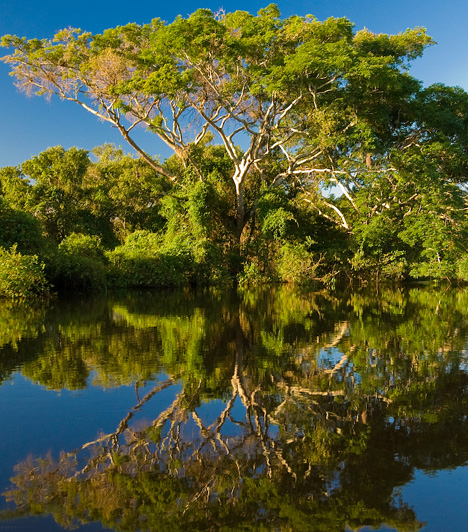 A leghosszabb folyóSokáig a 6695 kilométer hosszú Nílust tartották a világ leghosszabb folyójának, azonban mára bebizonyosodott, hogy a 6850 kilométeres Amazonas a két folyó közötti verseny győztese, mely egyben a világ legnagyobb vízgyűjtő területével is büszkélkedhet. Egy vadregényes amazonasi hajókázás felejthetetlen élmény.