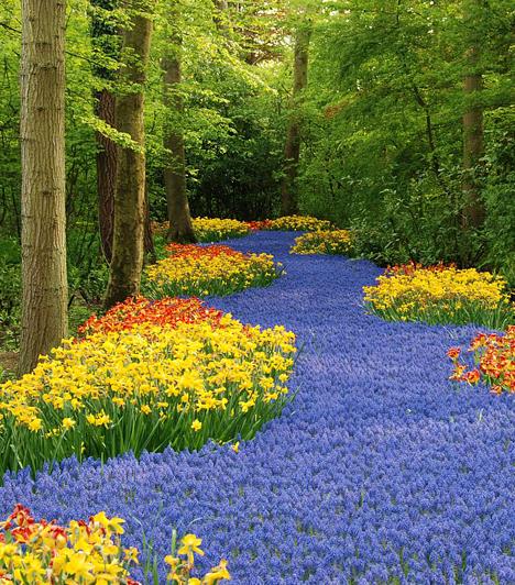 A legnagyobb virágoskert  Hétmillió tulipán és nárcisz csodálható meg a világ legnagyobb virágoskertjében, Keukenhofban, mely - elsősorban tavasszal érdemes felkeresni - évente több mint 800 ezer látogatót fogad.  Kapcsolódó galéria: A világ legszebb kertjei »