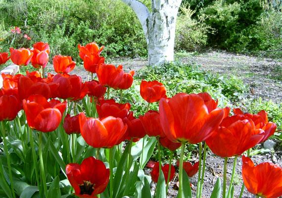 A Gellért-hegy déli lábánál található a meseszép Budai Arborétum. Vonzerejét elsősorban a nárciszok és tulipánok virágzása adja, de a japán díszcseresznyefák és az illatozó orgonák szintén szemet gyönyörködtetőek.