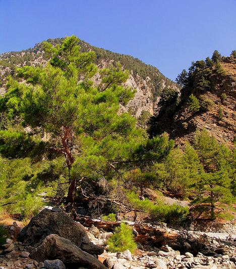 Samaria-szurdokA krétai Samaria Gorge Nemzeti Park a sziget legfőbb turisztikai látványosságának számít, köszönhetően Európa második legnagyobb szurdokvölgyének, a Világörökség része címre is felterjesztett Samaria-szurdoknak. A ciprusokkal övezett völgyön át egészen a Líbiai-tengerig el lehet sétálni.