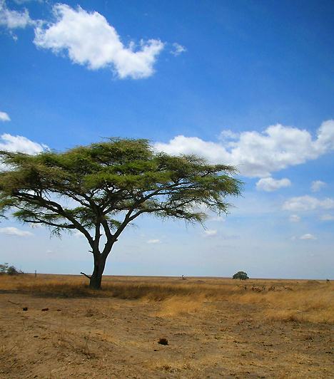 Serengeti Nemzeti Park, TanzániaA szafaritúrák egyik legnépszerűbb célpontjaként ismert nemzeti park Tanzánia északi és középső részén csaknem 15 ezer négyzetkilométernyi területet foglal el. Szavannáin és bozótjain kívül a növényevő csordák ezreinek éves vándorlásáról, illetve az őket követő ragadozókról híres.