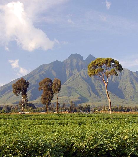 Virunga Nemzeti Park, ZaireAz 1925-ben létrehozott nemzeti park, melynek területe több mint nyolcezer négyzetkilométer, Zaire északkeleti részén terül el. A parkot a világ leginkább híres vadállománya, azon belül is az itt élő hegyi gorillák kapcsán ismeri.