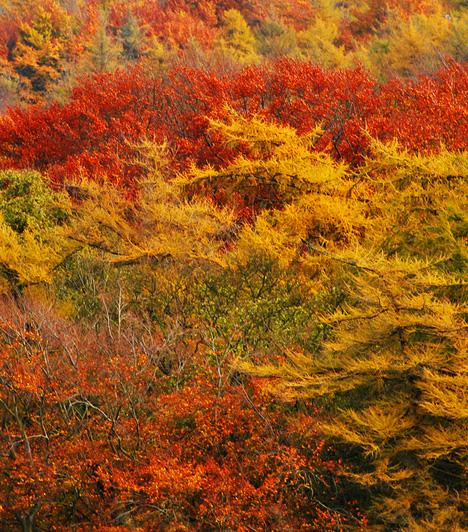 Cotswolds, Nagy-Britannia  Az Anglia középnyugati részén található terület a vérbeli brit vidéket testesíti meg, annak apró, idilli falvaival, tanyáival, természetességével, barátságos, nyugodt életstílusával. A vidéket tavasszal és nyáron uraló buja zöld mezőket csak az ősszel sárgába, narancsba és vörösbe forduló táj látványa képes felülmúlni.