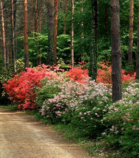 Jeli arborétum  A Vas megye gyöngyszemeként számon tartott, közel 107 hektár területű Jeli Arborétumot nyár elején különösen érdemes felkeresni. A virágzó rododendronok színkavalkádjának szédítő hatását az arborétum piknikezőhelyén pihenheted ki.