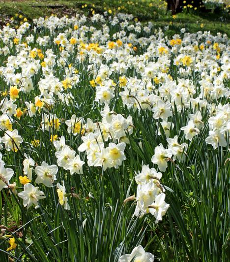Basa-kert  A Babócsa határában található, 13 hektáros kert nárciszai álat vált híressé, melyek tavasszal fehér virágszőnyegként borítják be a tájat. Egykor állítólag egy basa ültette őket háremhölgyei örömére. A csodaszép látnivalót a Duna-Dráva Nemzeti Park Igazgatósága védetté nyilvánította, többek között azért is, mert egész Európában nem található ekkora kiterjedésű nárciszmező.
