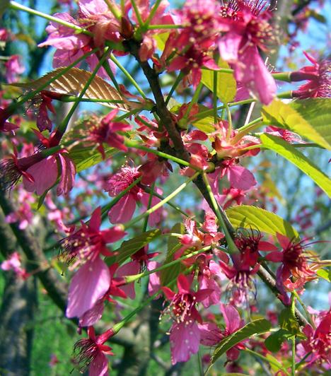 Vácrátóti arborétum  A Budapesttől északra található, ma már 180 éves arborétumban 13 ezer növényfajt gondoznak. Az angolpark stílusú főúri kastélykert látnivalói közé tartoznak színpompás virágai is, közöttük a különleges cseresznyefajok, melyek májusban mesébe illő sziromesővel borítják be a kertet.  Kapcsolódó cikk: 3 romantikus piknikezőhely Budapest környékén »