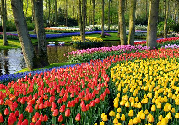 A virágok szerelmeseinek életükben egyszer látniuk kell a hollandiai Keukenhofot. Az Európa kertjeként is ismert park a világ legnagyobb virágoskertje.