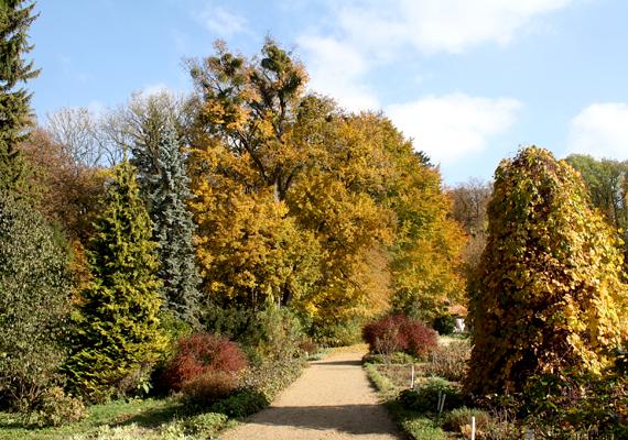 A Bakony gyöngyszeme, a meseszép Zirci Arborétum november 15-ig tart nyitva, utána csak márciusban lehet újra látogatni.