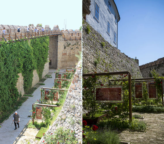 A felújítás része volt a 15. és 16. században élt magyar főúrnő, Kanizsai Dorottya rózsakertje, melyben az illatos virág mellett számos fűszernövény is helyet kapott.