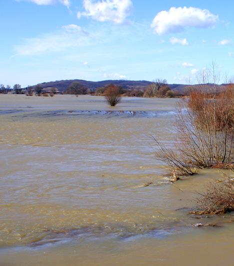 Duna-Ipoly Nemzeti ParkA Duna-Ipoly Nemzeti Parkot 1997-ben alapították, a pilisi és börzsönyi természetvédelmi területek, valamint az Ipoly ártereinek és érintett szakaszainak egyesítésével. Hazánk egyik leggazdagabb élővilággal rendelkező nemzeti parkja híres arról, hogy olyan állat- és növényfajok is megtalálhatóak területén, melyek sehol máshol az országban - ilyen például a havasalji rózsa vagy a sügérféle selymes durbincs.