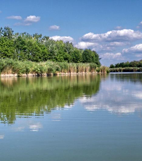Kiskunsági Nemzeti ParkHazánk második nemzeti parkját 1975-ben alapították az Alsó-Tiszavidék árterei, a Duna-völgy szikes pusztái és löszpartjai, valamint a Duna-Tisza közötti homokhátságok élővilágának védelmére. A park tavai állandó fészkelőhelyet jelentenek a gémek és kócsagok számára, míg a gyakran futóhomokos buckavidéken naprózsát, kései szegfűt, homoki vértőt és kékvirágú szamárkenyeret láthatnak a kirándulók.