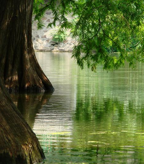 Körös-Maros Nemzeti ParkA dél-alföldi területeket egyesítő Körös-Maros Nemzeti Parkot 1997-ben alapították. Geológiai jellegét tekintve a terület két részre osztható, a Körös vidékére, valamint a Békés-Csanádi Löszhátra. A három megyét is érintő park egyik legfontosabb feladata, hogy a hazánkban csak itt található erdélyi hérics és bókoló zsálya állományát fenntartsa.