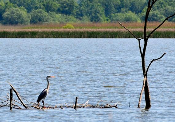 Az egykor Kiskörei-víztározónak is nevezett Tisza-tó ma Magyarország legnagyobb mesterséges tavának számít, melyet a Tiszán hoztak létre egy 1973-ban épített duzzasztógáttal. A páratlan szépségű tó igazán különleges kirándulásokra csábít - érdemes például kipróbálni a csónakos túrákat -, sajátos atmoszféráját azonban az olyan történetek is erősítik, mint amilyen például az egykori Óhalászé, melynek nevét ma már csak az Óhalászi-holtág, illetve az Óhalászi-medence őrzi. A település sorsát az 1876-os jeges áradás pecsételte meg, melynek során a falu csaknem teljesen lakhatatlanná vált. A település lakóit ekkor Lőrincfalvára költöztették, egykori otthonaikat pedig ma már víz borítja. Ide kattintva még részletesebben ismerheted meg a történetet!