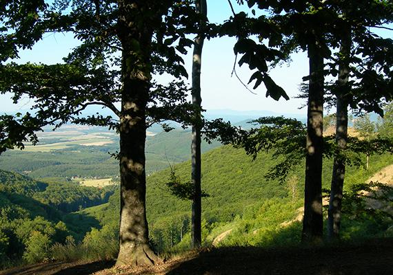 A Mátra természeti kincseit az 1985-ben létrehozott Mátrai Tájvédelmi Körzet vigyázza, mely a Bükki Nemzeti Park igazgatása alatt áll.