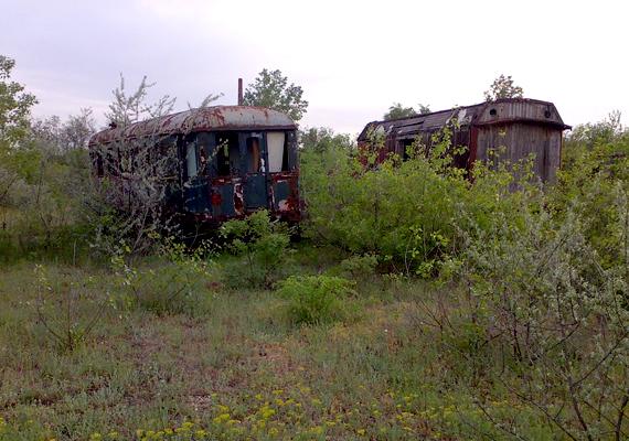 Növények vették birtokukba a vasúti kocsikat.