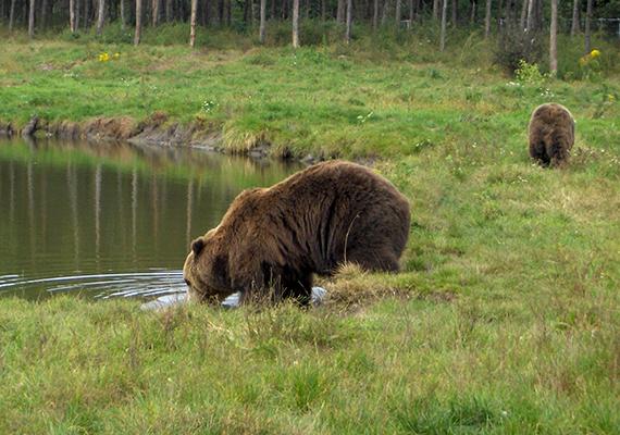 A medveotthon az év minden napján látogatható, október 1. és február 29. között reggel 8 óra és sötétedés között lehet felkeresni.