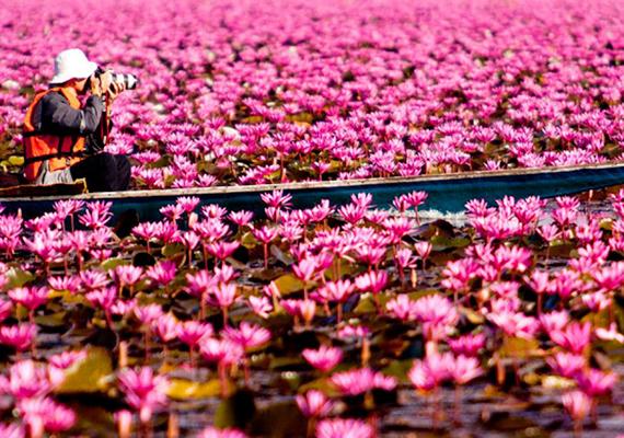A thaiföldi Lótusz-tó nemcsak látványával teheti földközelebbivé az égi csodákat, de területén valóban fontos szerepet játszik a spiritualitás. Ha többet szeretnél tudni róla, kattints ide!