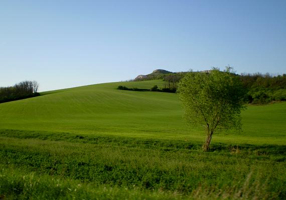 Az Üvegtigris hazája, Tinnye neve dinnyéhez és hinnyéhez hasonló hangzása miatt került be az összeállításba.