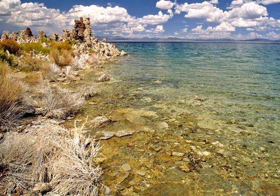 A só miatt őshonos halak nem élnek a tóban, igen nagy mennyiségben fordulnak azonban elő benne sórákok, melyek miatt a költöző madaraknak is kedvelt pihenő- és fészkelőhelye.
