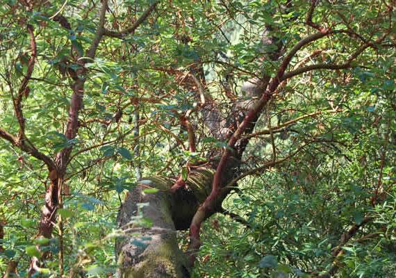 Nemcsak csavarodva, elhajolva növő fákkal, hanem a lejtőn felfelé guruló tárgyakkal is lehet találkozni. A kételkedők szemfényvesztésnek tartják, egyesek pedig mágneses változást tulajdonítanak a helynek.
