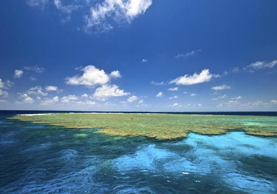 Az 1980-as évek óta a korallok jelentős része tűnt el, az előrejelzések szerint pedig 2030-ra általánossá válhat kifehéredésük, vagyis pusztulásuk.