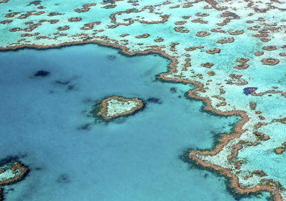 Bűbájos alakzatokat rajzolnak ki a korallok.
