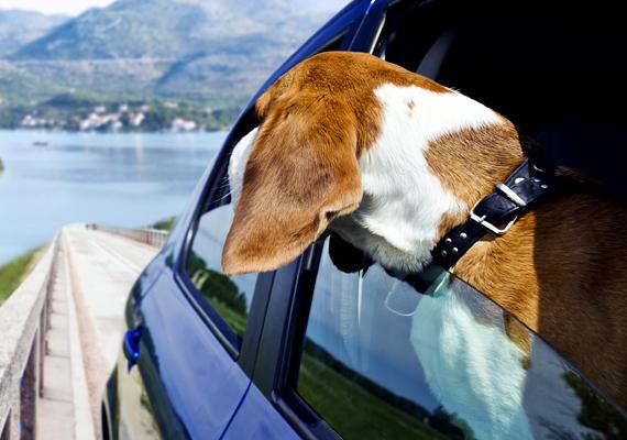 Ha háziállat is veled utazik, a NAV vámszabályai szerint elengedhetetlen, hogy rendelkezzen állatútlevéllel. Ezt a háziorvos állítja ki.