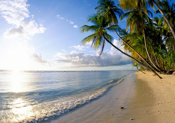 Pálmafák és tenger - kell ennél több? A képen a Dominikai Köztársaság egyik strandja látható. Kattints ide a háttérképért!
