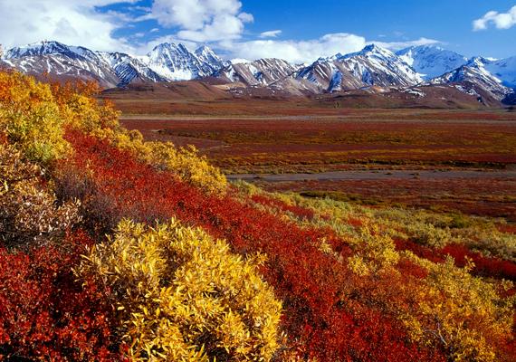 Íme, ilyen színes az ősz Alaszkában, az Alaska Range hegyvonulat környékén. A háttérképért kattints ide!