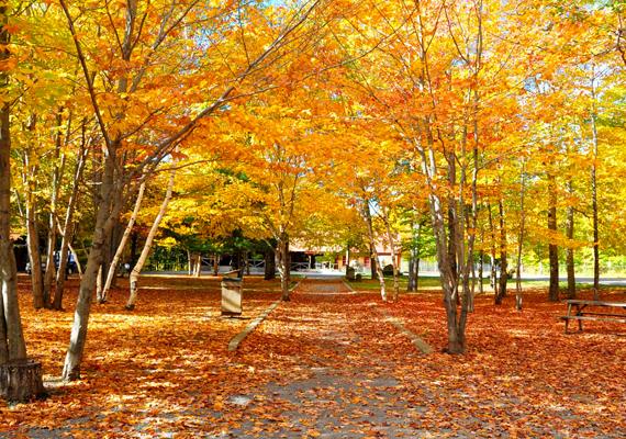 A kanadai Quebec-ben található Sainte Ann Canyon és környéke festői sárga, illetve narancssárga színekbe burkolózik ősszel. A háttérképért kattints ide!