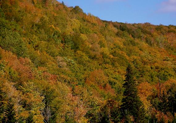 A kanadai Új-Skócia őszi tájai is kedveltek a kirándulók, nem utolsósorban pedig a fotósok körében. A háttérképért kattints ide!