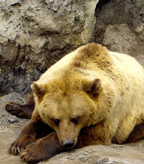 Veresegyház                         Ha nem egy teljes napot, csupán egy délutánt szentelsz a kirándulásnak, Veresegyház felé is veheted az irányt, ahol a Medveotthon tartogathat kellemes perceket. A medvéket és farkasokat befogadó állatfarm az év minden napján nyitva áll a látogatók előtt. Itt hatalmas területen kerülhetsz kerítésnyi közelségbe az állatokhoz, illetve meg is etetheted a macikat egy hosszú nyelű fakanállal. Ha ezután túrázni is kedved van, a Veresegyházi Tavak Tanösvényt se hagyd ki, melynek mentén körbesétálhatod a település állóvizeit.