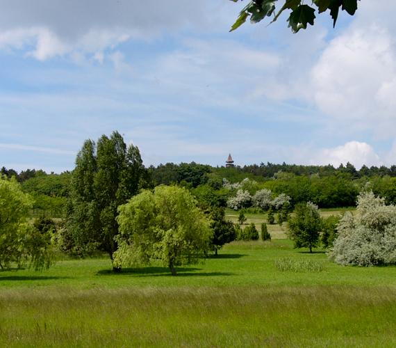 A Pákozd-Sukorói Arborétum is tökéletes úti cél a kirándulóknak.
