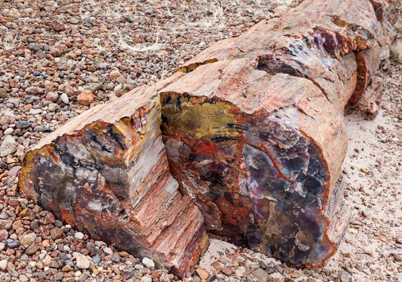 Az ősi, 225 millió éves erdő fái, melyek alatt egykor a korai dinoszauruszok élhettek, mára tömör, kemény kővé változtak.