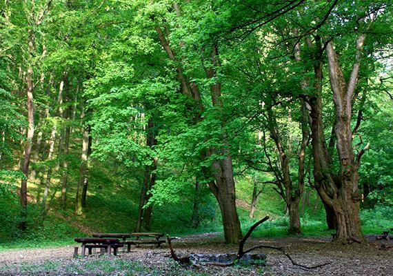 Pilisszentkereszt a környékbeli kirándulások kedvelt kiindulási pontja, a falu közvetlen közelében is számos kiemelkedő szépségű látnivaló található. A képen a Pilisszentkereszt fölötti erdőben található, Mária-pad nevű pihenő látható.