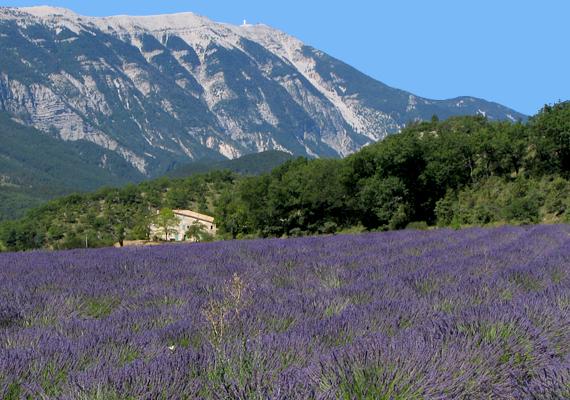 A levendulamezők fölött Provence híres és legendás hegye, a Mount Ventoux magasodik.