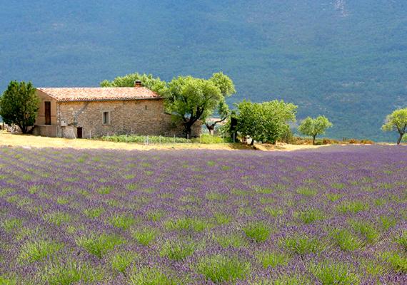 Tipikus vidéki táj Provence-ban.