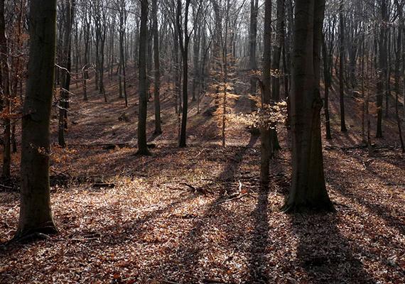 Pusztamarót környéki erdő. A 13. században létrejött település volt nemesi és királyi birtok is, a 14 és a 20. század között pedig érseki tulajdonban állt - utóbbinak köszönhetők kastélya és híres halastavai. Az 1945 utáni kitelepítések megpecsételték a falu sorsát, bányászokat telepítettek ide, akik azonban lassan elhagyták a falut, és a közeli bányászlakótelepekre költöztek.