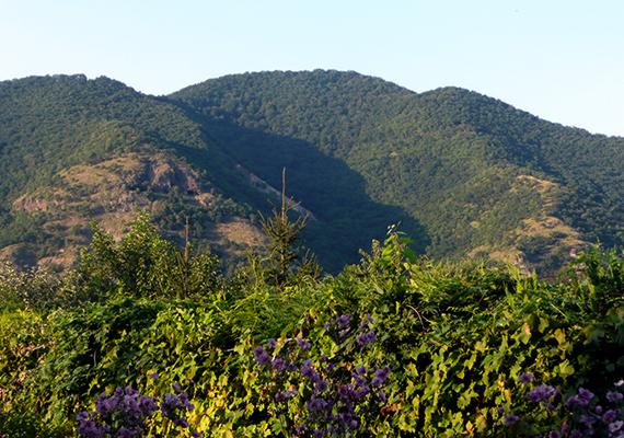A Dömös fölött húzódó Rám-szakadék a Rám-hegy tömbjébe vágódó völgy, a Három-forrás-völgy része, és körülbelül egy kilométeren át - illetve 112 méteres szintkülönbséggel - húzódik Dömös és Dobogókő között.