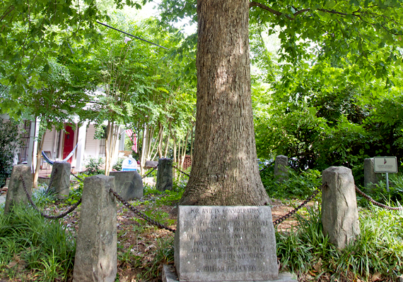 A georgiai Athénban található egy hely, mely egy fának a tulajdona. Az itt található emléktábla és sírkő - az eredeti fa már elpusztult - kijelenti, hogy ennek a fának öntudata és önrendelkezési joga van, és nyolc láb föld minden irányban az övé.