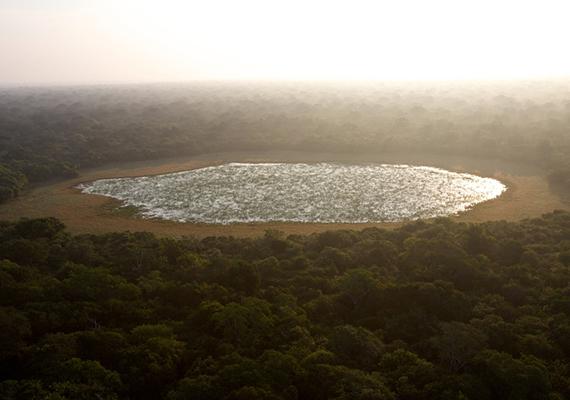Légifelvétel egy az esőerdő közepén kialakult tócsáról, amely értékes vízforrás az itt élő állatok számára.
