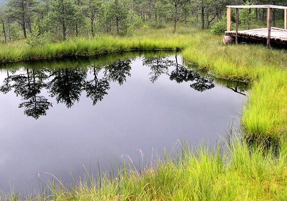 A főként a csapadékmennyiség által táplált, tölcsér alakú tómeder a megfigyelések szerint folyamatosan töltődik fel, emellett a növényzet is terjed, így előfordulhat, hogy idővel a Mohos-tőzegláp sorsára jut, egykor ugyanis utóbbi is egy tó volt. A képen a láp látható.