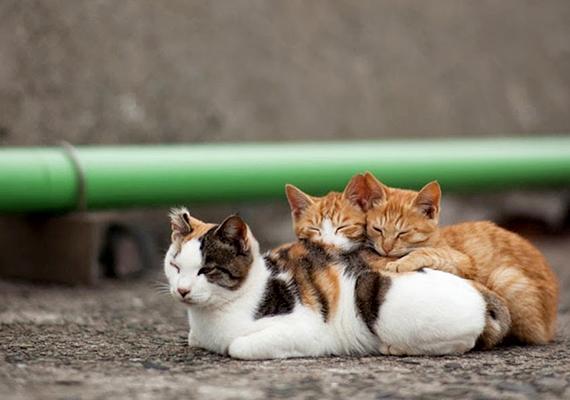 A sziget számos macskáknak emelt szentélyt és emlékművet is a magáénak tudhat, az azonban, hogy legfőbb látványosságát mi jelenti, egyértelmű.