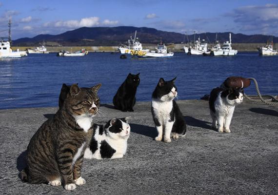 Kutyákat nem is szabad a szigetre vinni.