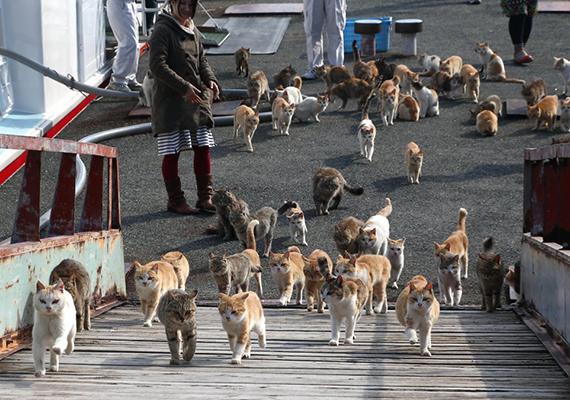 A szigeten több a macska, mint az ember - a lakók főként idősek, így kérdéses, meddig marad lakott a hely -, nem véletlen, hogy macskaszigetként, macskamennyországként is emlegetik.